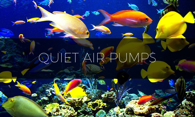 best quiet air pumps