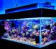 Best Quiet Fish Tank Filter