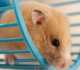 Best Quiet Hamster Wheels